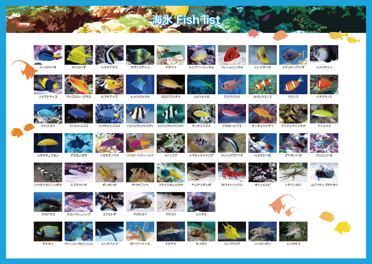 海水魚リスト