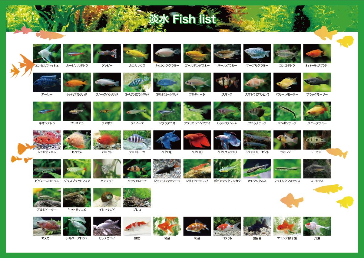 淡水魚リスト