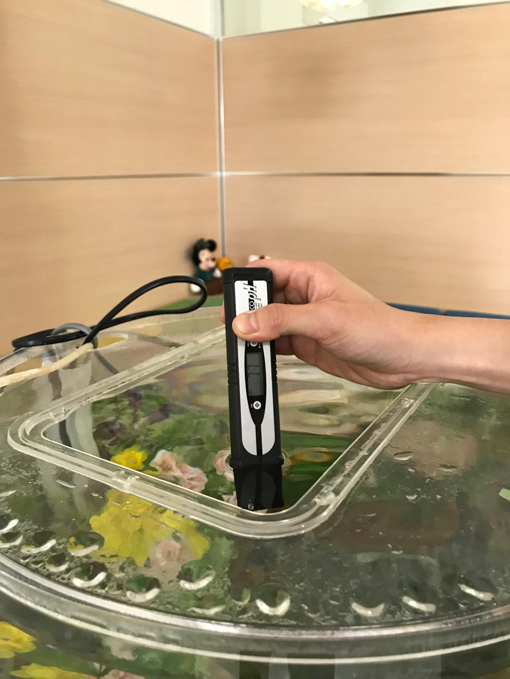 レンタル水槽コラージュの水質チェック