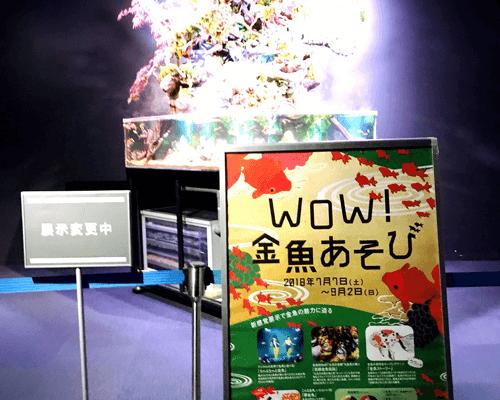 WoW金魚あそび in 京都水族館 和風テラリウム