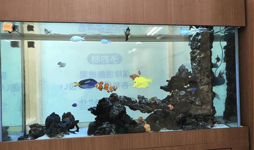 魚と珊瑚の共存アクアリウム