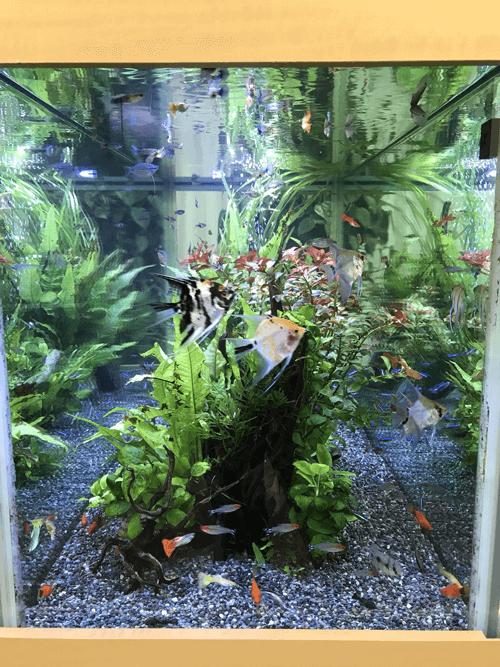 水草共に状態が良くお魚の繁殖にも成功