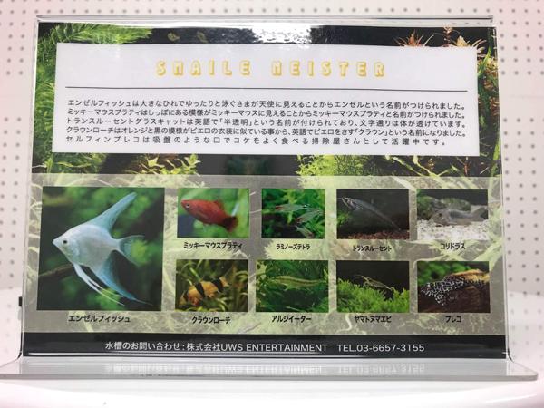 東京のレンタル水槽8種類の魚に、ヤマトヌマエビというエビ