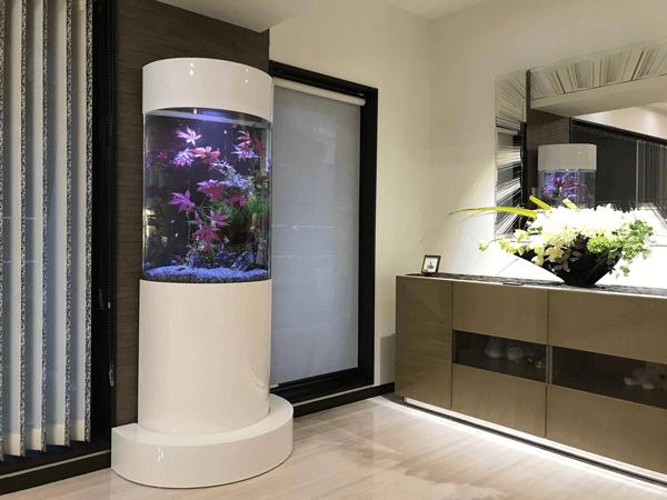 レンタル水槽コラージュ 個人宅新規設置