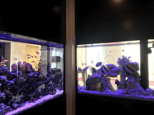 カクレクマノミとハタゴイソギンチャクの共生オーダーメイド水槽