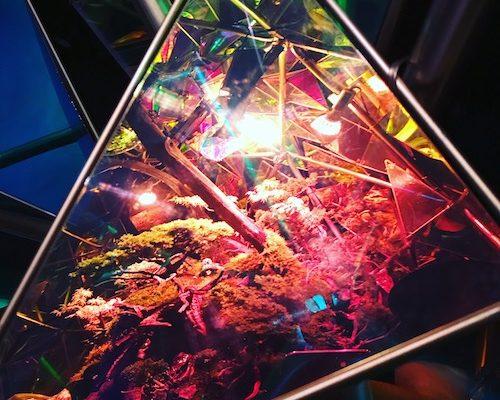 金魚ミュージアムの楽しみ方⑤
