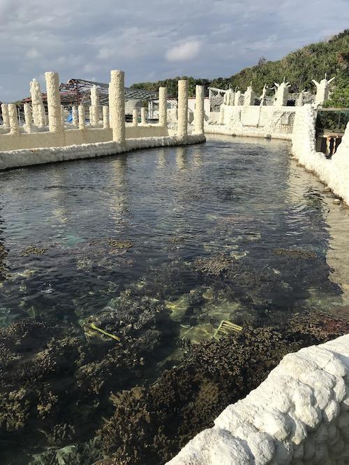 陸上のサンゴ礁 サンゴ畑 池