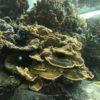 陸上のサンゴ礁 サンゴ畑 サンゴの写真