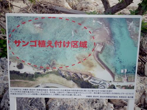 陸上のサンゴ礁 サンゴ畑 サンゴ養殖地