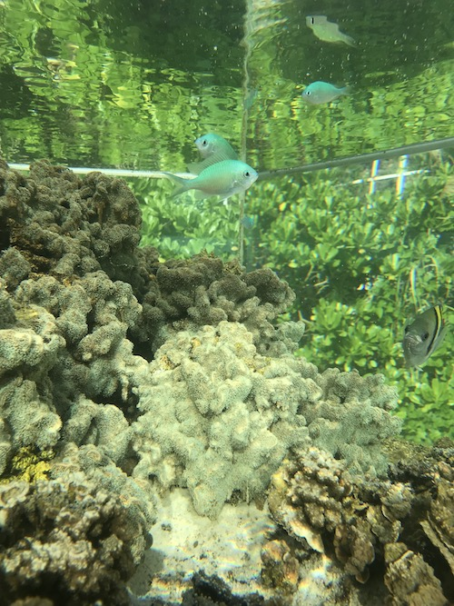 陸上のサンゴ礁 サンゴ畑