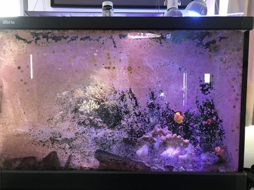 サンゴ水槽の大掃除&リメイク!