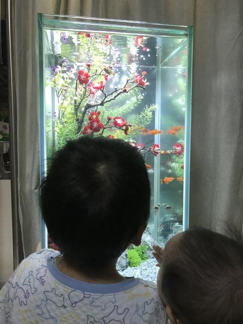 水槽リメイク大作戦!