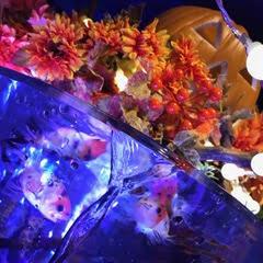 Halloween Aquarium